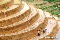 Ruong Bac Thang - Gao Sach Viet Nam - Gian Hang San Pham Tot -- 24
