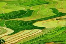 Ruong Bac Thang - Gao Sach Viet Nam - Gian Hang San Pham Tot -- 25