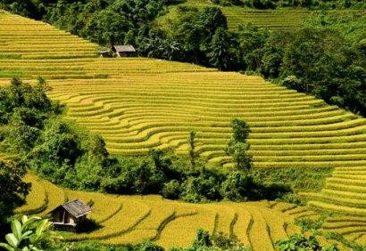 Ruong Bac Thang - Gao Sach Viet Nam - Gian Hang San Pham Tot -- 29