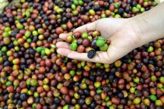 Ngành cà phê Việt Nam