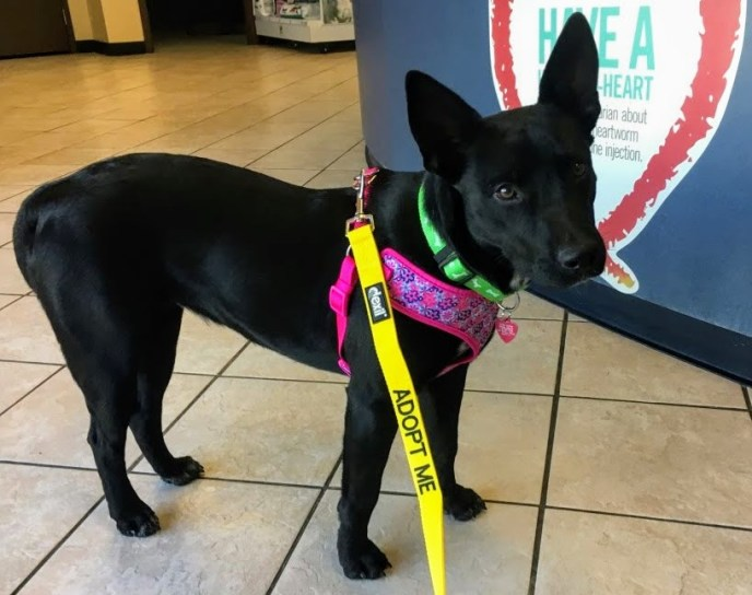 Adopt Carly - New Hope Animal Rescue