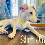 SlimJim - ADOPTED