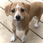 Roland-Adopted