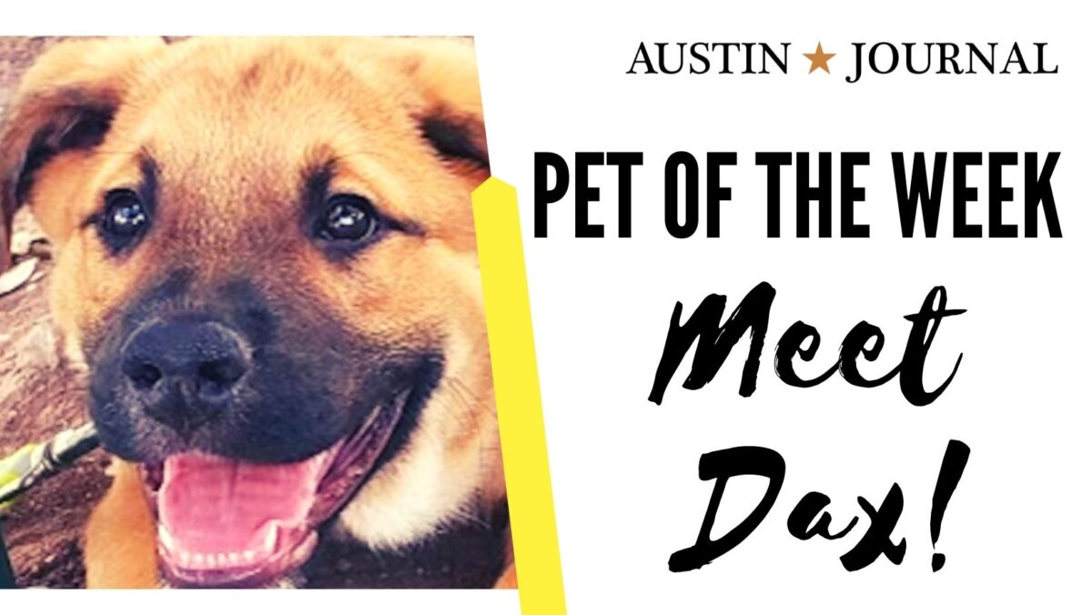 Dax pet of the week