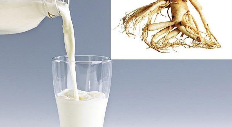 nhân sâm sữa