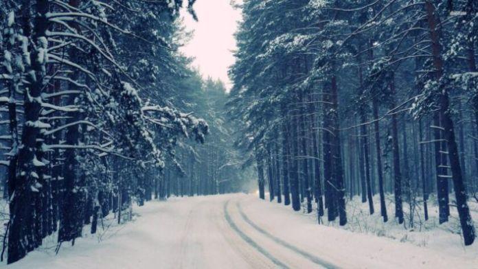 Bức hình mùa đông lạnh với con đường vắng vẻ giữa rừng