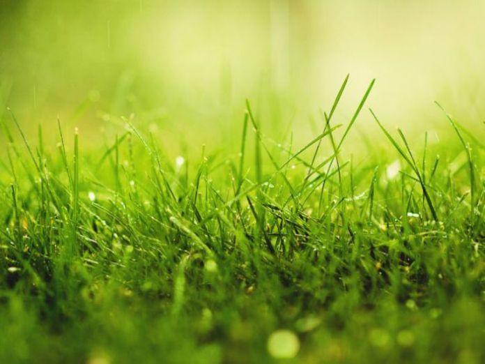 Hình nền màu xanh lá cây