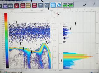 08242018-sonar-of-smelt-sm