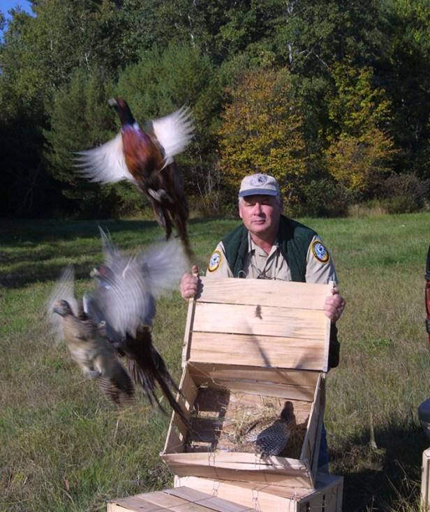 Eric Orff pheasant stocking by Jane Vachon-NHFG