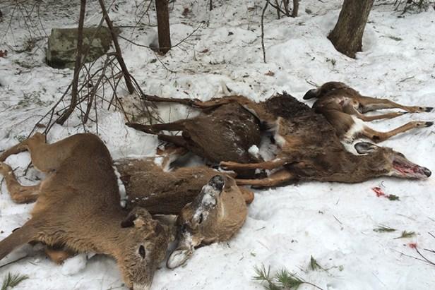 2015 deer deaths