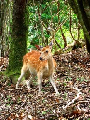 nhsoa-lyme-disease-prescott-az-deer
