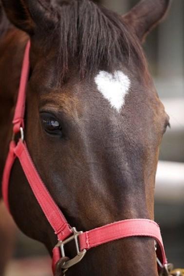 Còn chú ngựa này cũng có khoang lông hình trái tim