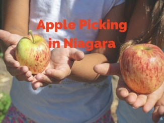 apple picking in Niagara