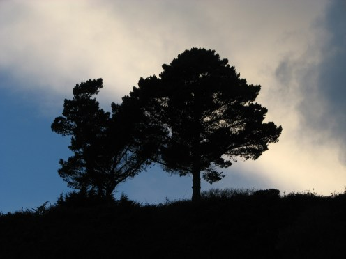 """""""Winter dusk trees"""" Killiney Beach, County Dublin, Ireland"""