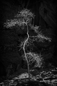 Lone Tree, The Narrows, Niall Whelan Photography,