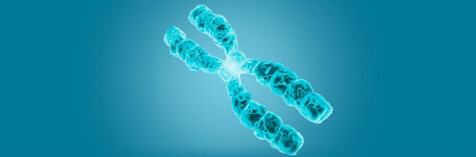 Le gene creatif du docteur Clery, une avancee scientifique ?