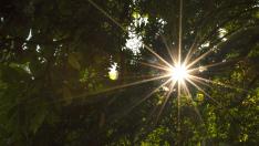 bomen-zon-geluk-voelen