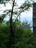 The corresponding protected falcon home :)