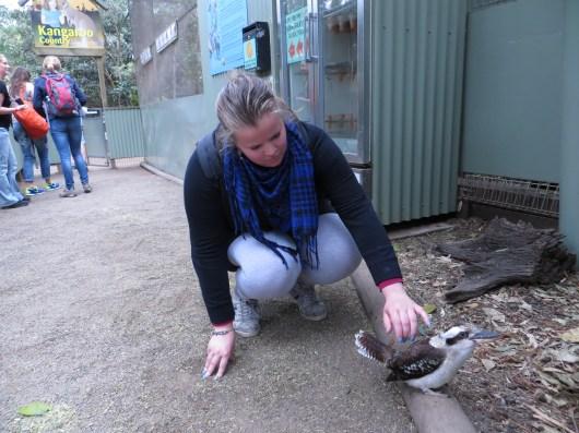 Kookaburra aaien!