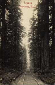 Comox Logging's mainline a few miles north of Courtenay, c. 1912. Courtesy of Courtenay & District Museum & Archives, P13 989.69.23