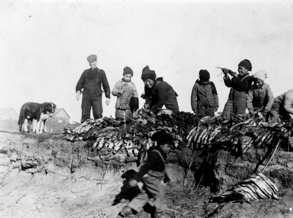 4. Boys examining a huge load of fish from Fish Point- 15 miles from Hay River. Bishop Lucas helping unload the fish, c. 1920 YK Museum Soc./NWT Archives/N-1979-056-0035