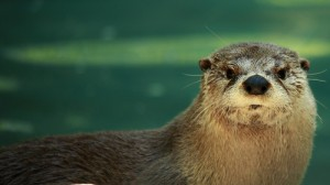 Otter Near Water Wildlife 3 by Forest Wander