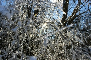2013 Ice Storm. Photo. J. MacFadyen