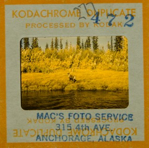 Archival Reference: Yukon Archives, Father Jean Mouchet Fonds, 91/51R, #277: Caribou on Bank of River