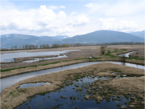 The dikes are still visible today at the Creston Valley Wildlife Management Area.  Photo: Anne Dance