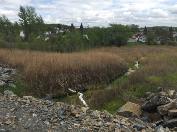 After leaving the culvert, the green water makes its way through this marshy area, which runs behind the houses located on Walter Avenue. This waterway used to flow into the neighbourhood creek that Frank discusses above. Image taken from Big Nickel Mine Drive, May 27, 2015. Author's photo.