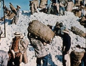 Empaque y transport de algodón. Guatemala, 1979-1985. Archivo del Ejército Guerrillero de los Pobres, EGP. Fototeca Guatemala, CIRMA (GT-CIRMA-FG-060-04-80)