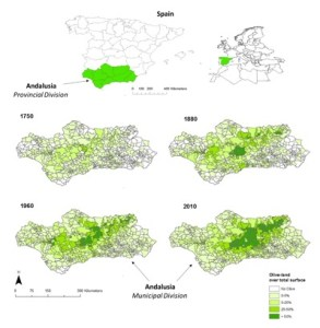 Figure 1. Geography of olive expansion Andalusia at municipal level