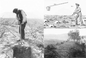 On the left, a farm worker burying leaf litter and branches in ditches dug between rows of vines to fertilize them. On the right, an engraving and picture about the preparation of formiguers. From Galàn et al. (2012).