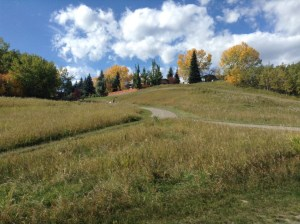Fish Creek Park: The pathway between Bow Valley Ranch and Glennfield Picnic Area. The homes at the top of the hill are in the Midnapore neighbourhood. Photo by Jessica DeWitt, October 2015.