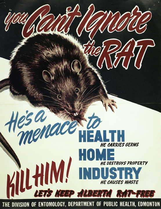 """You Can't Ignore the Rat,"" Provincial Archives of Alberta. Commissioned and Distributed by Division of Entomology, Department of Public Health, Government of Alberta, 1950."