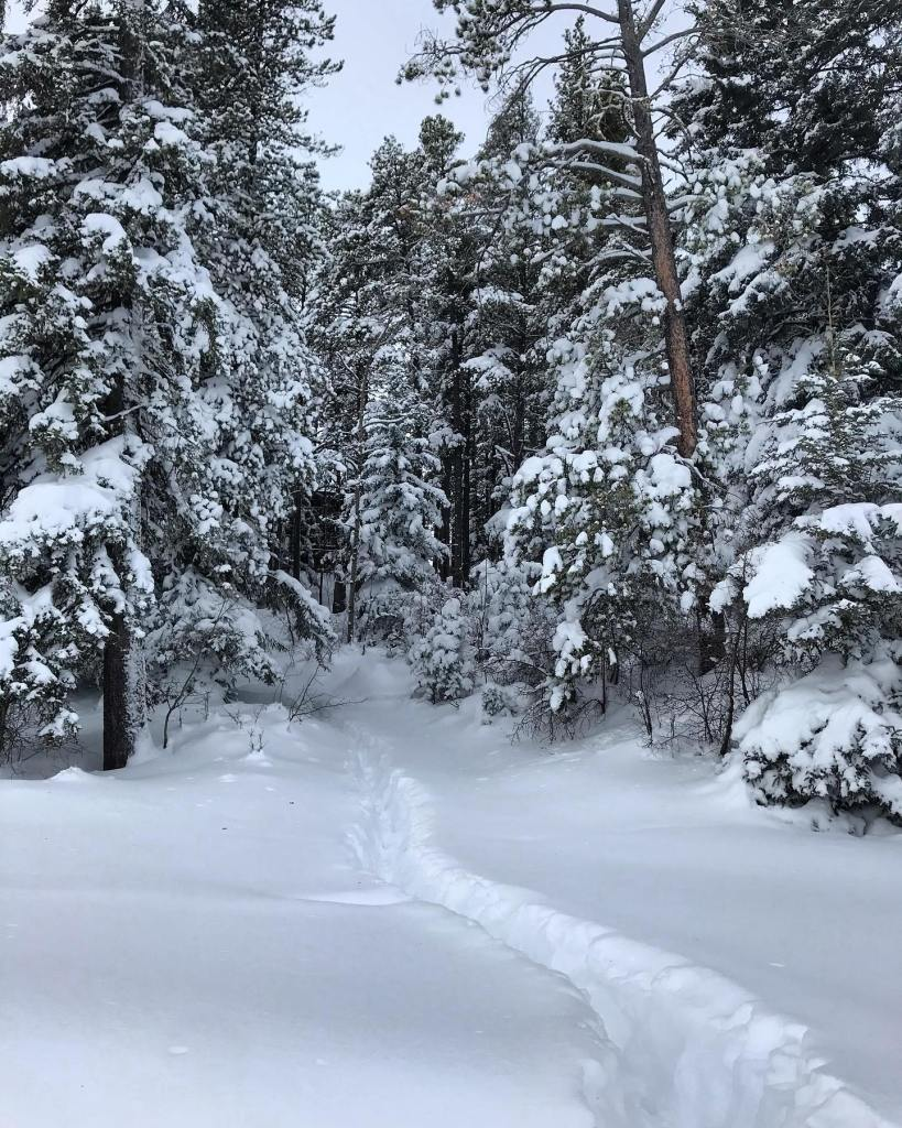 A heavy snowfall covers the trees and a deep foot path through the snow weaves through the trees at Cypress Hills Provincial Park.