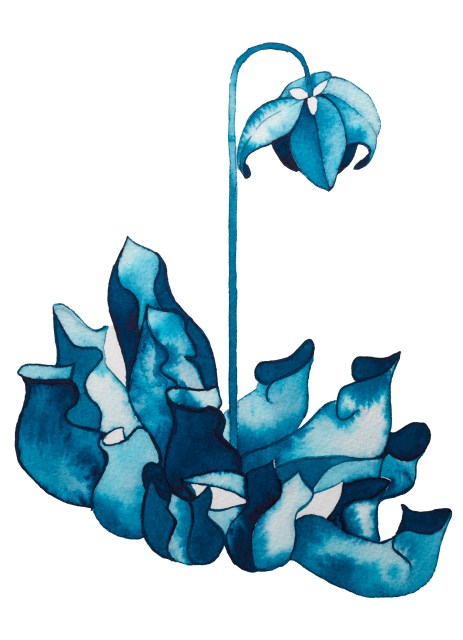 Illustration of a flower, in shades of blue.