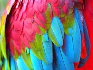 plumage-43374_640