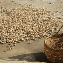 Many peanuts scattered on the ground with an empty basket nearby