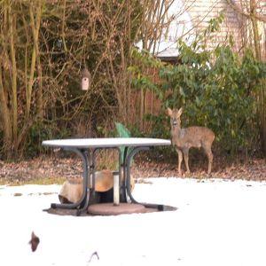 Gast im Garten. Schön - aber nicht willkommen.