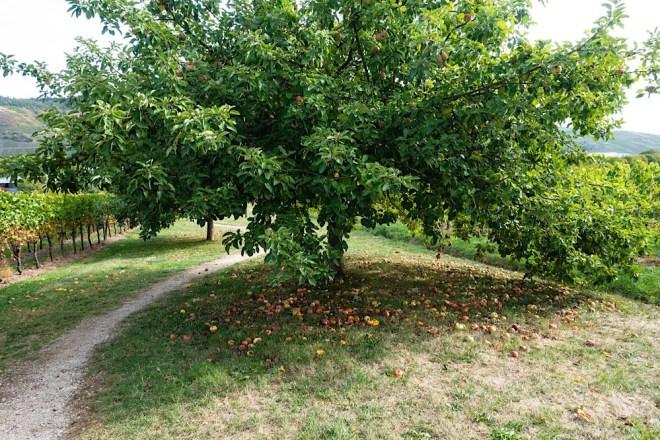 Apfelwiesen