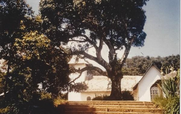An diesem Baum fing es an