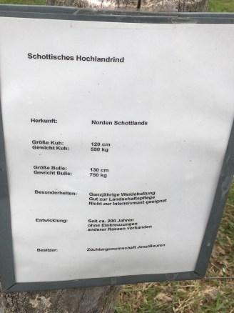 Schottische Hochlandrinder in Schrift ...