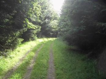 2008-07-05-wiehengebirge-018
