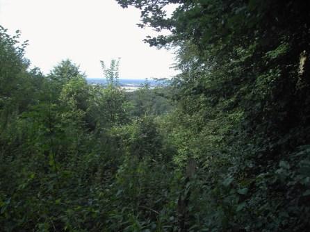2008-07-05-wiehengebirge-020
