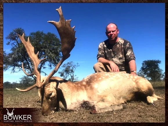 White fallow deer trophy with spots