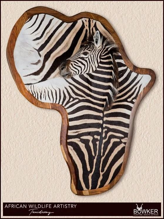 Zebra rug mount sheild