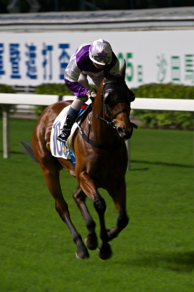 Jockey in purple and white riding racehorse