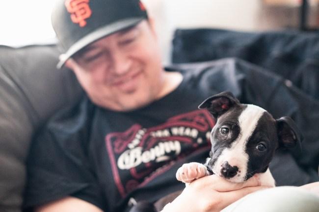 Mika, aka @itsmelilmika - Bull Terrier Puppy