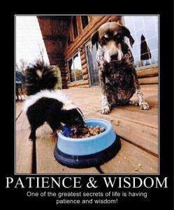 Patience, Wisdom, and Skunks